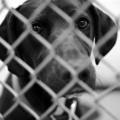 sad-shelter-dog2